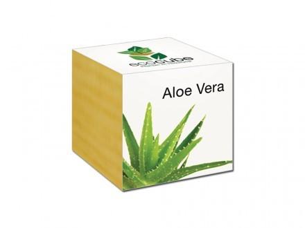 Ecocube Aloe Vera Växt